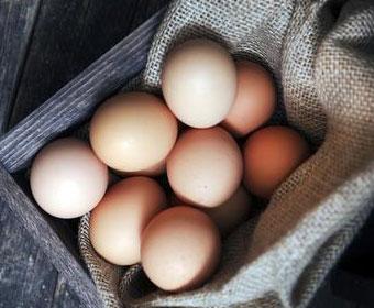non-gmo pastured eggs from Taylor family farm